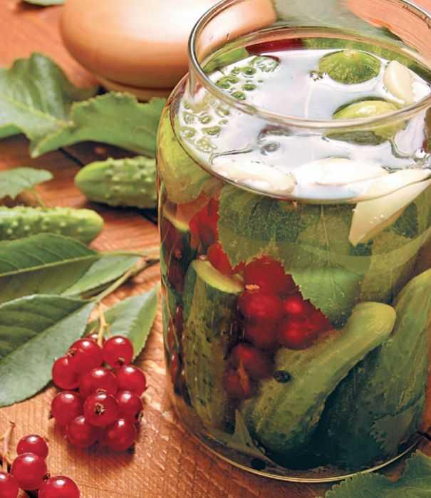 Лучшие проверенные рецепты огурцов на зиму