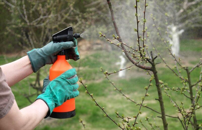 Обработка сада ранней весной от вредителей и болезней